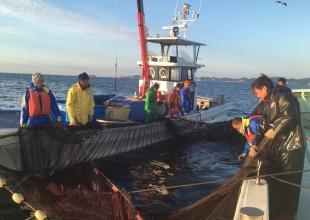 定置網漁の現場指導